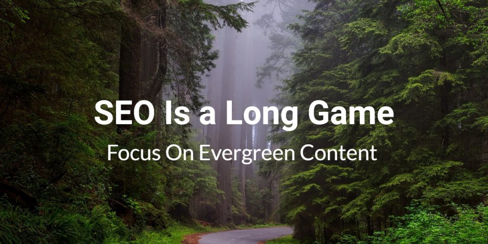 SEO is a long game | redwood forest
