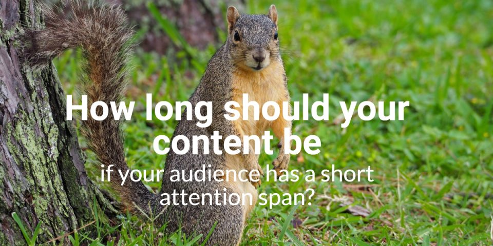 How long should your content be? - squirrel